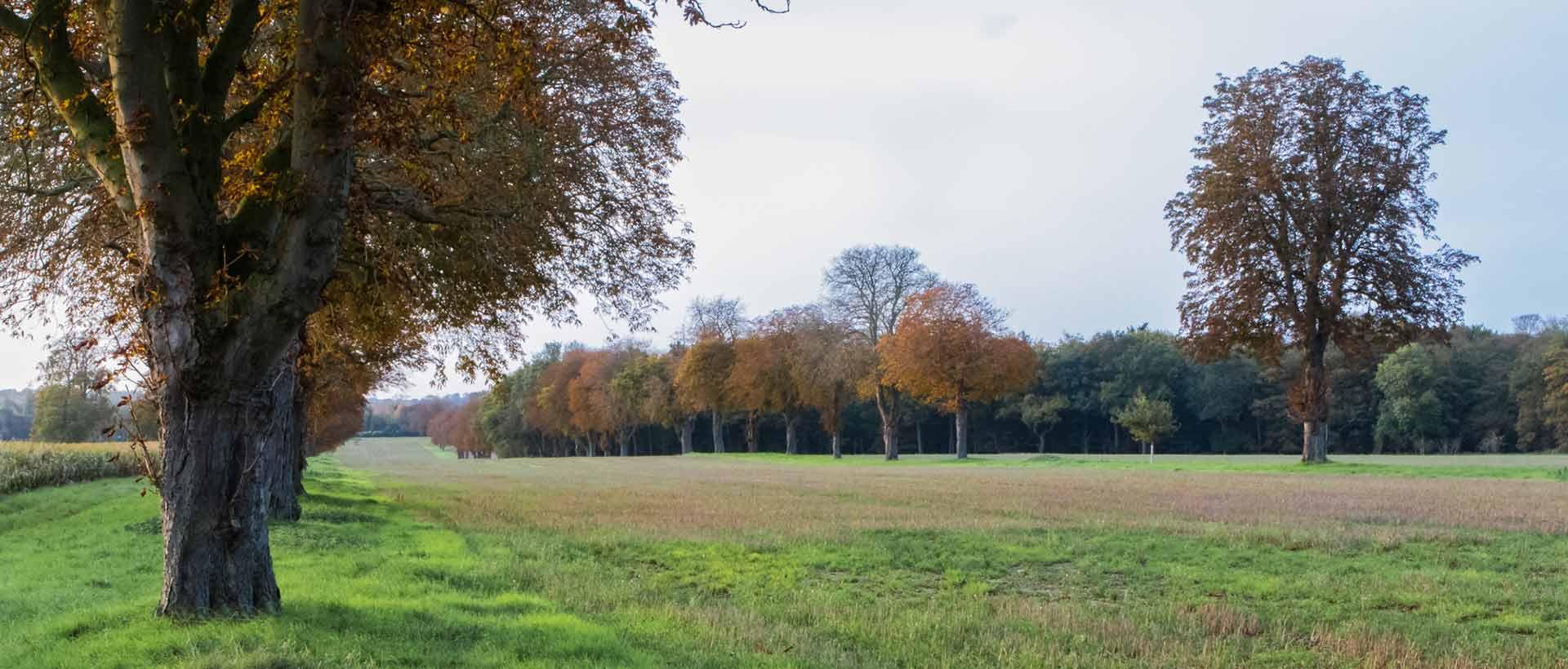 Histopry of Quidenham Estate Shoot
